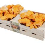 Pieprznik jadalny kurka świeży 500g